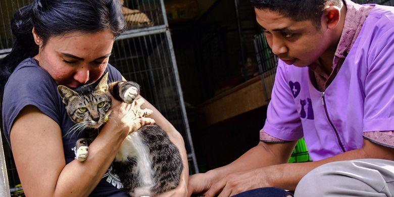 Violetta Kisah Penyelamat Ratusan Kucing Di Indonesia Hingga Malaysia Halaman All Kompas Com