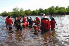 Marak Alih Fungsi Lahan, 95.000 Bibit Mangrove Ditanam Kembali