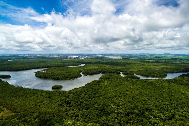 Ilustrasi hutan hujan tropis Amazon di Brasil, Amerika Selatan