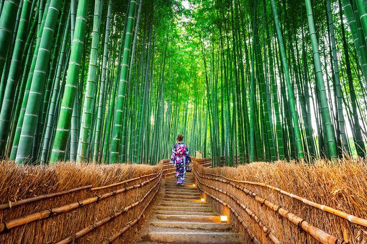 Pesona Hutan Bambu Sagano.