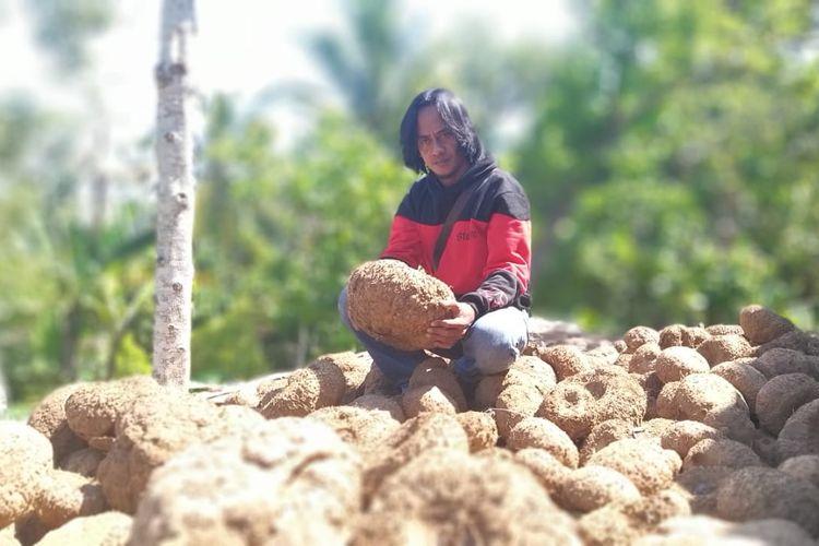 UMBI PORANG?Paidi, warga Desa Kepel, Kecamatan Kare, Kabupaten Madiun menunjukkan umbi porang yang akan diekpsor ke luar negeri. Paidi sukses mengembangkan porang hingga mengubah nasibnya pemulung menjadi milyader.