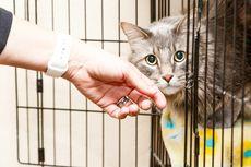 Ternyata Kucing Tak Perlu Minum Susu, Simak Penjelasannya