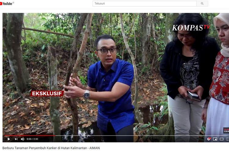 Jurnalis Kompas TV Aiman Witjaksono mengunjungi lokasi tumbuhan bajakah.
