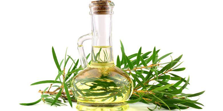 ilustrasi minyak kayu putih (eucalyptus)