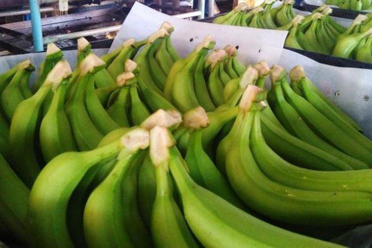 Ilustrasi: pisang cavendish berkulit mulus yang telah dibersihkan. Pisang ini akan matang dan berubah menjadi kuning untuk siap dimakan.