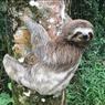 Bukan Siput, Sloth jadi Hewan Terlambat di Dunia