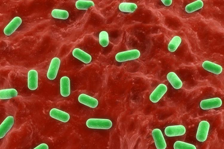 Ilustrasi bakteri probiotik