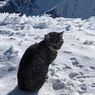 Tersesat, Kucing Ini Ikuti Pendaki hingga ke Puncak Gunung Setinggi 3.000 Meter