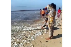 Video Viral Ikan Berserakan di Tepi Pantai Pandaran, Kalteng, Apa yang Sebetulnya Terjadi?