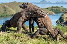 UNESCO Minta Hentikan Proyek di TN Komodo, Ini Tanggapan Menparekraf Sandiaga