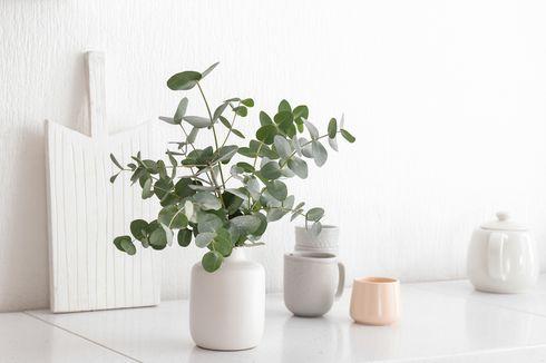 Cara Merawat Tanaman Eucalyptus di Dalam Ruangan, Jadi Elemen Dekorasi