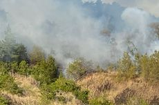 Kebakaran Hutan di Gunung Batur Bali Dipadamkan, BPBD: Murni Faktor Alam, Lahan Kering...