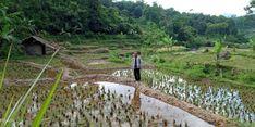 Kementan Sarankan Petani di Aceh Barat Daya Gunakan AUTP untuk Atasi Gagal Panen