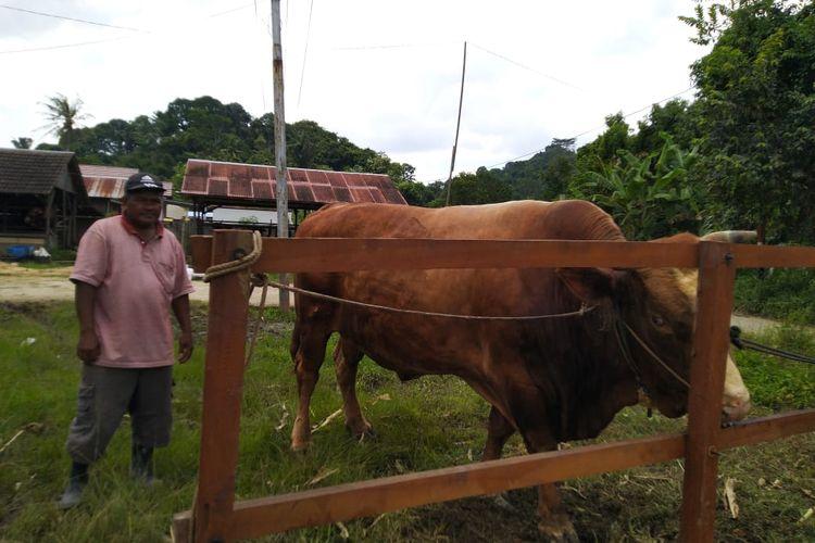 Subroto saat menunjukan sapi yang dibeli Presiden Joko Widodo di Kelurahan Lempake, Samarinda, Kaltim, Rabu (29/7/2020).
