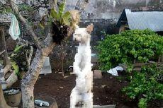 Viral Kucing Disiksa dengan Digantung di Bali, Pengunggah Foto Dipolisikan