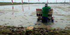 Ekspor Beras, Cara Indonesia Taklukkan Negara Lain