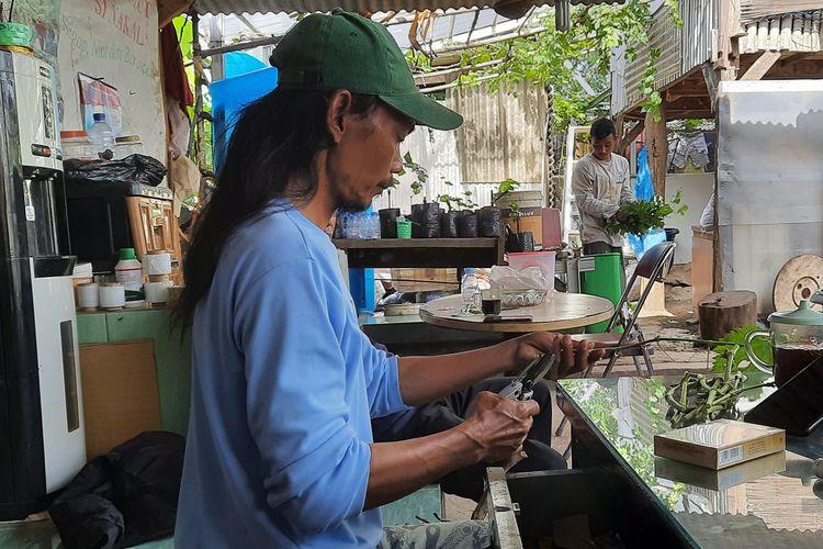Yatno Gondrong, pengelola Kebun Imut Sinakal di Duren Sawit, Jakarta Timur.