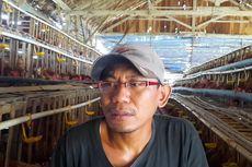 Peternak Ayam di Blora Merugi: Harga Telur Turun Drastis, Harga Pakan Enggak Ada Turunnya