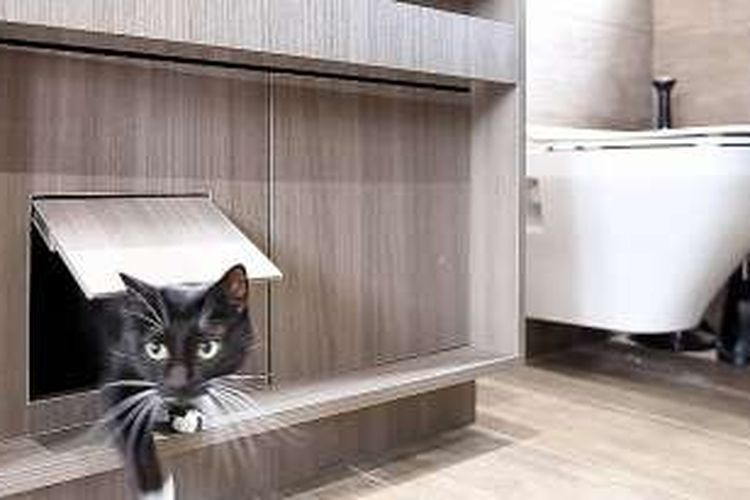 Apartemen ramah kucing di Taipei, Taiwan.