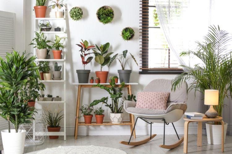 Ilustrasi tanaman di dalam rumah