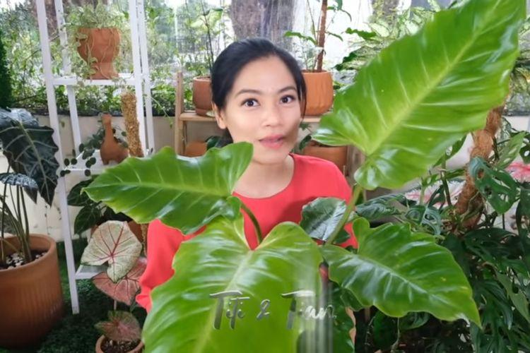 Titi Kamal dan tanaman hiasnya