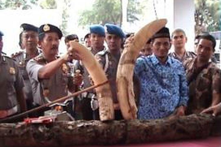 Ilustrasi: Warga Aceh Jaya menyerahkan gading gajah.