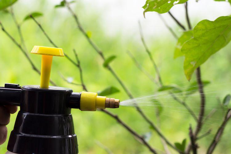 Ilustrasi menyemprotkan insektisida, pembasmi hama pada tanaman.