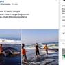 Ramai Hiu Paus Terdampar di Pantai Congot, Yogyakarta, Ini Penjelasan BKSDA