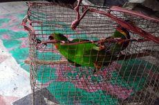 Tiga Orang Tertangkap Tangan Berburu Burung di Taman Nasional