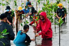 Pilih Nyemplung Menanam Mangrove, Jokowi: Masak Saya Sendiri di Darat, Kan Nggak Lucu...
