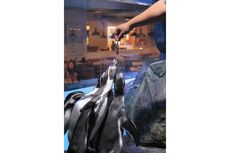 Pengalaman Bertemu Penguin di Jakarta, Unik!