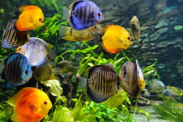 Ilustrasi ikan dalam akuarium