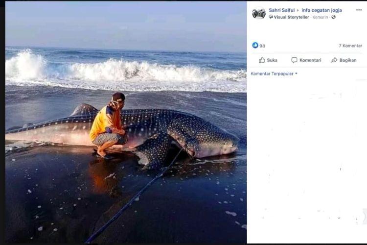 Tangkapan layar hiu paus terdampar di Yogyakarta