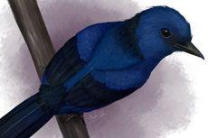Kali Pertama, Ilmuwan Ungkap Burung Prasejarah Berwarna Biru