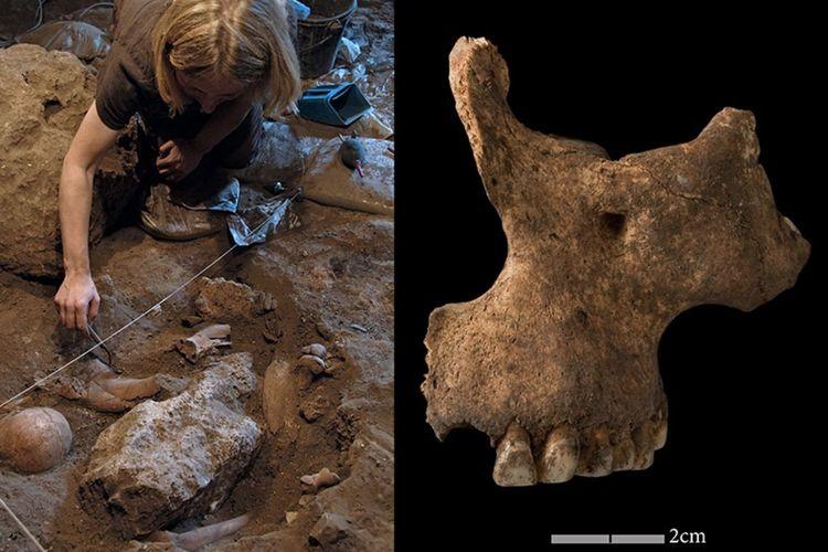 Fosil di Afrika Utara