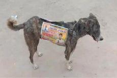 Para Caleg India Gunakan Anjing Liar sebagai Papan Iklan Berjalan