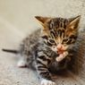 4 Cara Mengatasi Kucing yang Mengalami Keracunan