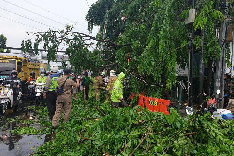 Sebuah pohon di Jl. Mayjen Sutoyo di depan pos Pusat Grosir Cililitan, Kramat Jati, Jakarta Timur tumbang pada Minggu (8/11/2020) sekitar pukul 12.00 WIB akibat hujan deras dan angin kencang.