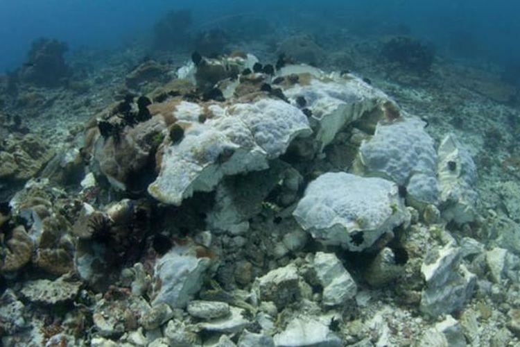 Kepala karang yang dibom dengan ikan mati di tepi taman nasional Komodo, Indonesia. Penangkapan ikan dengan dinamit adalah salah satu praktik memancing paling merusak yang terjadi di dalam dan di sekitar taman. Foto: Mike Veitch / Alamy