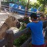 Lamongan Masuk PPKM Level 1, Maharani Zoo Akan Kembali Dibuka bagi Wisatawan