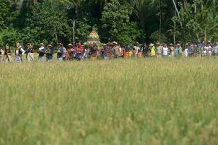 Warga mengikuti kirab dalam kegiatan tradisi Wiwitan yang ditujukan untuk mengawali masa panen raya di Dusun Kedon, Desa Sumbermulyo, Bambanglipuro, Bantul, DI Yogyakarta, Rabu (6/8/2014). Tradisi tersebut digelar sebagai wujud syukur atas berkah Tuhan yang berupa panen melimpah serta untuk menghormati Dewi Sri atau Dewi Kesuburan. Pada musim tanam ini, sebanyak 160 petani yang tergabung dalam kelompok tani Mandiri menggarap sawah seluas 20 hektare tersebut dan mampu menghasilkan 87,52 ton gabah kering panen. Hasil tersebut di atas target yang telah ditetapkan sebelumnya yakni 79,67 ton. KOMPAS/FERGANATA INDRA RIATMOKO