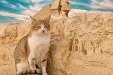 Mengapa Orang Mesir Kuno Terobsesi dengan Kucing? Ini Alasannya