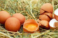 Bolehkah Makan Telur Mentah?