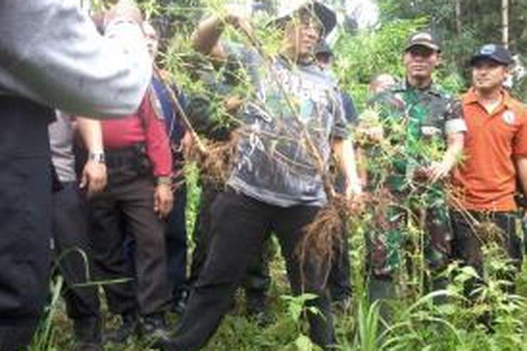 Petugas gabungan BNN, Polri dan TNI memusnahkan ganja