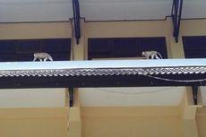 Kawanan Monyet Sambangi Kantor Wali Kota Mataram