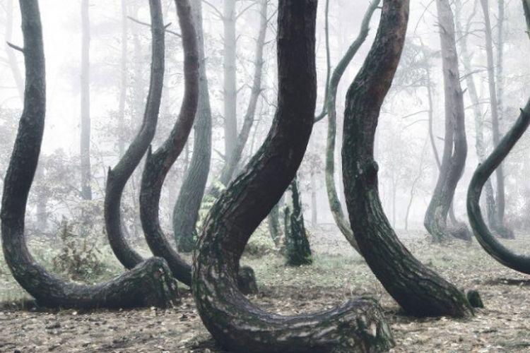 Hutan Bengkok di Polandia