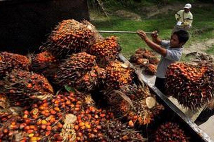 Ilustrasi: Pekerja menaikkan tandan buah segar sawit ke truk.