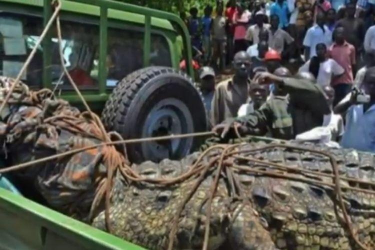 Buaya dengan panjang hampir 5 meter di Uganda yang telah memangsa 80 orang. [SS/YOUTUBE/THE RED PHOENIX]