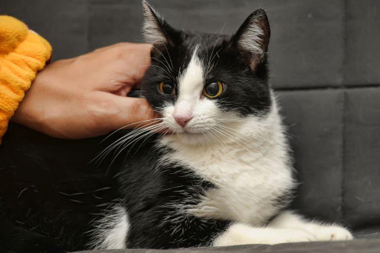 Kucing suka jika tubuhnya dielus dengan lembut.