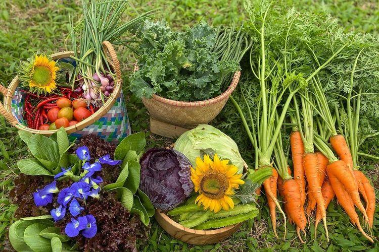 OJ Organic Farm